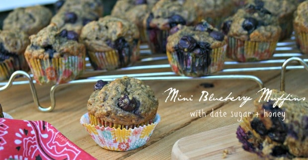 Mini Blueberry Muffins from www.everydaymaven.com