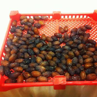 Freshly (that morning!) harvested Medjool Dates for us to snack on courtesy of Glen Vandervoort from Vandervoort Date Ranches