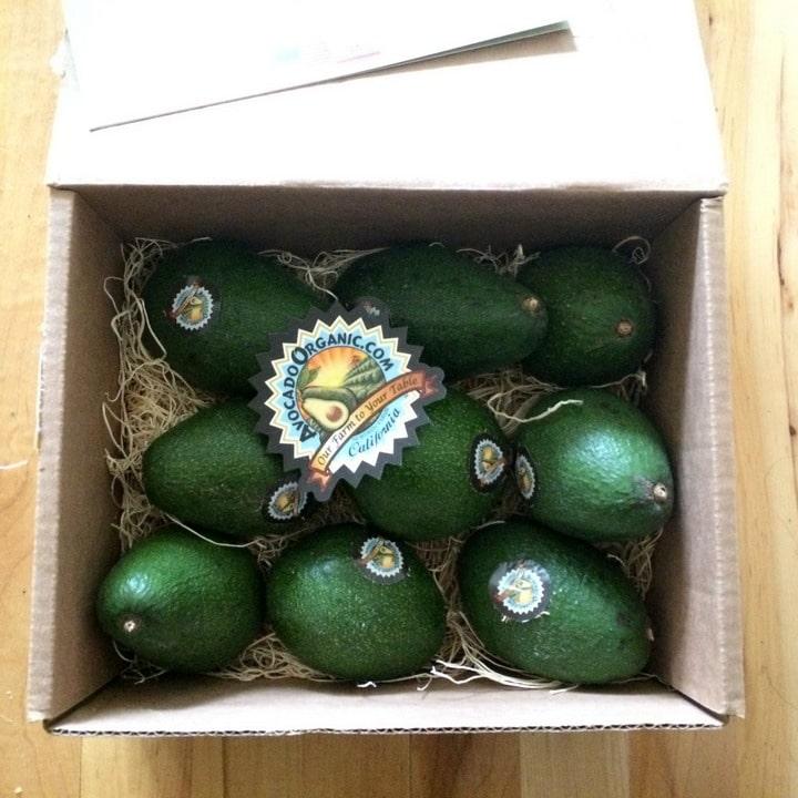 case of avocados from Avocado Organic on www.EverydayMaven.com
