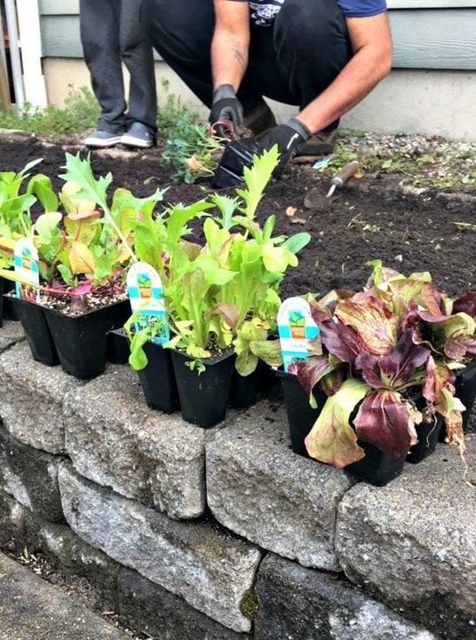 Planting an Organic PNW Vegetable Garden from www.EverydayMaven.com